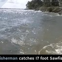 Fisherman catches 17-foot Sawfish
