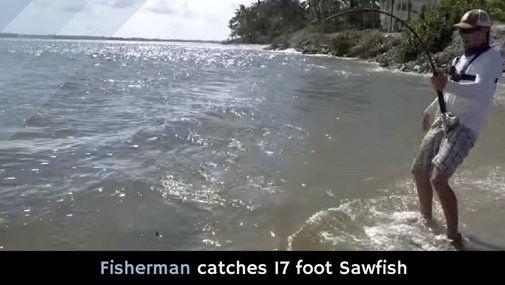 Fisherman catches 17-foot Sawfish