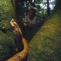Ilha de Queimada Grande: World's Deadliest Island