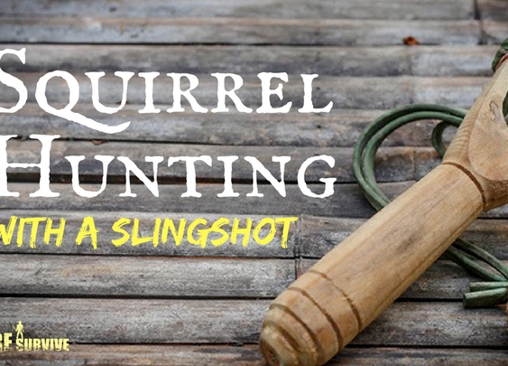 Squirrel Hunting with a Slingshot: 5 Tips to Make You a Pro