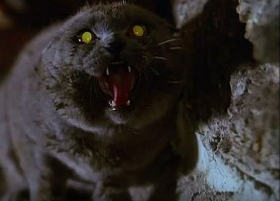 9 exceedingly creepy cat movies | MNN - Mother Nature Network