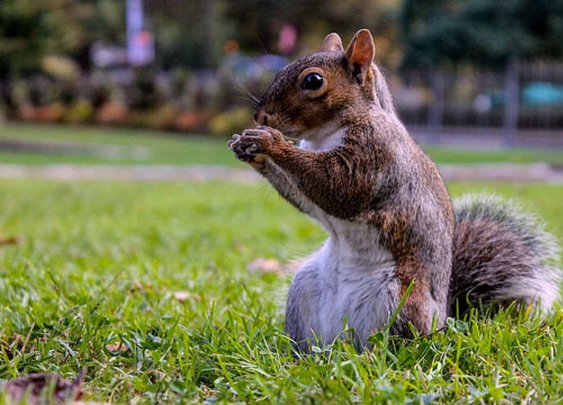 At least three injured in squirrel attack at senior living facility