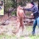 Man fights kangaroo to save his pet dog