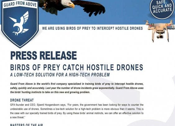 Guard From Above | We are using birds of prey to intercept hostile drones