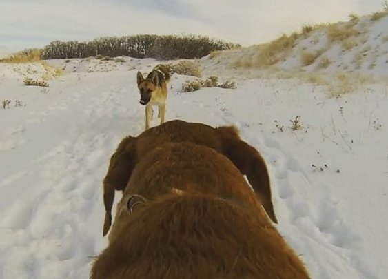 POV of a dogs hike