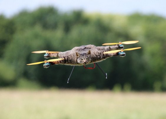 Taxidermy Drones | Gentlemint Reserve