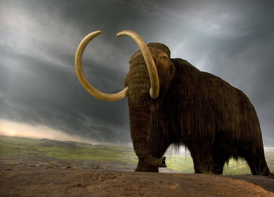 Can we grow woolly mammoths in the lab? George Church hopes so