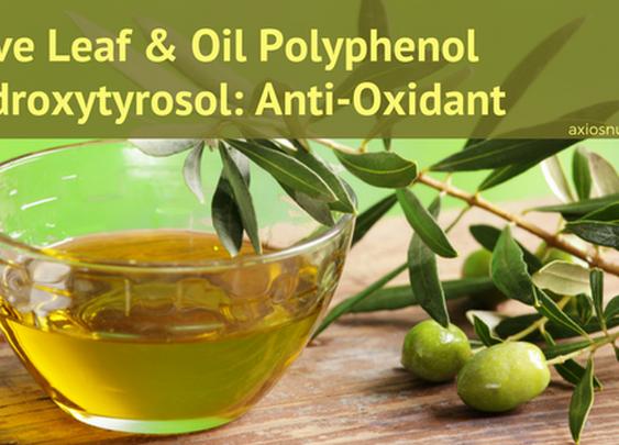 Olive Oil Polyphenol Hydroxytyrosol-Antioxidant Health Benefits – AxiosNutra