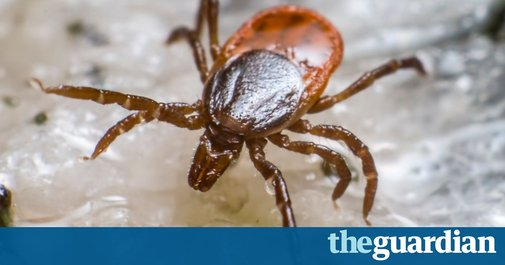 Tick bites that trigger severe meat allergy on rise around the world | Society | The Guardian