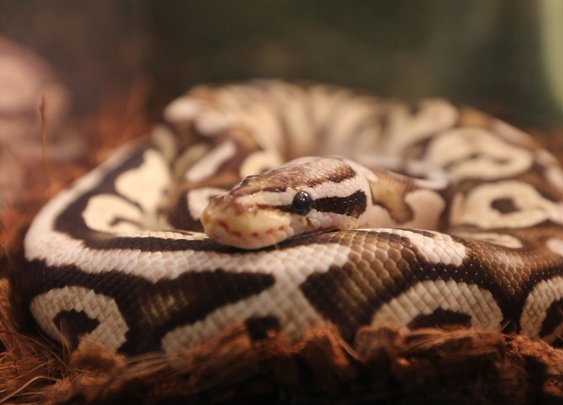 South Dakota man gets $190 fine for snake without leash