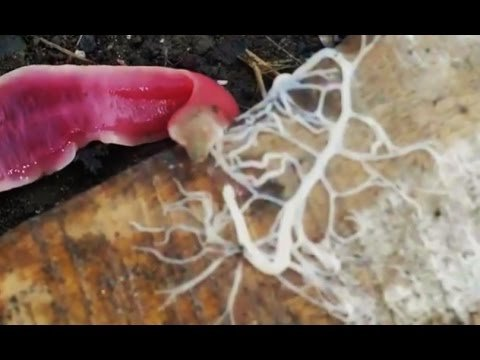 ALIEN-LIKE WORM SHOOTS GOOEY WEB - YouTube