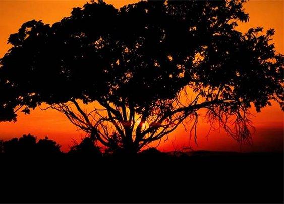 South African Aerial Safari