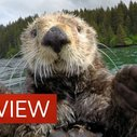 """Cute otters intimately filmed by """"spy sea otter"""""""