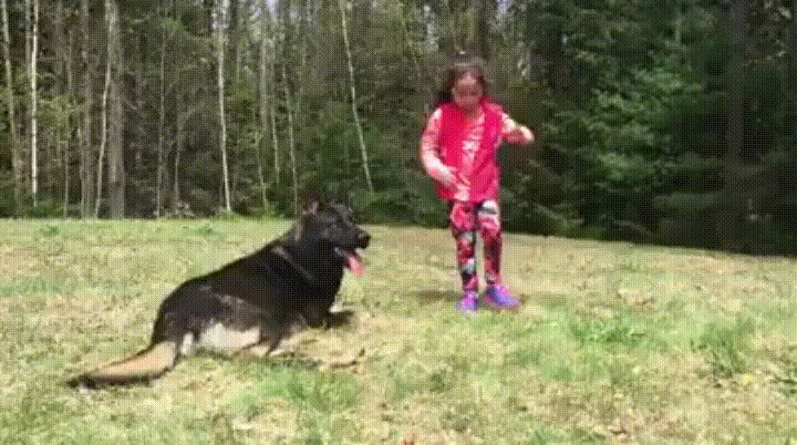 Dog Protecting His Human