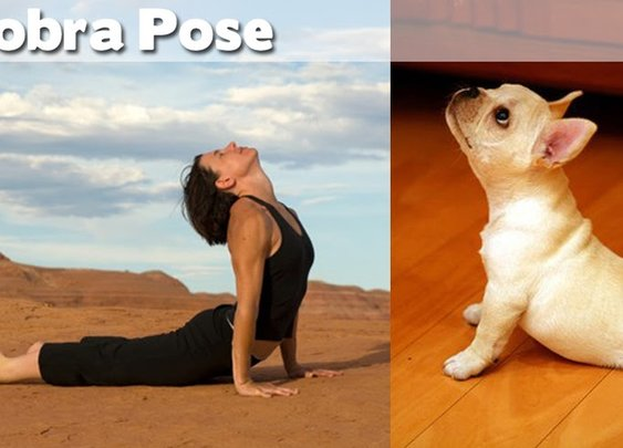 Animals Demonstrating Funny Yoga Poses