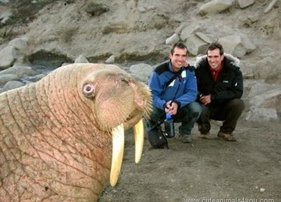 50 Funniest Animal Photobombs Of All Time