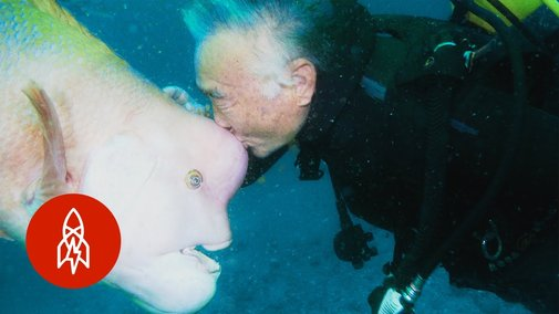 Scuba Diver Visits the Same Fish Every Day for 30 Years