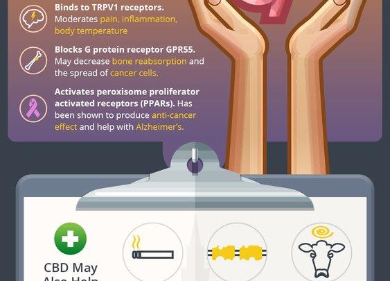 The Science of CBD - Best CBD Oils