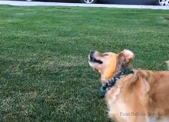 When you try your best but you don't succeed… – The Most Viral Videos
