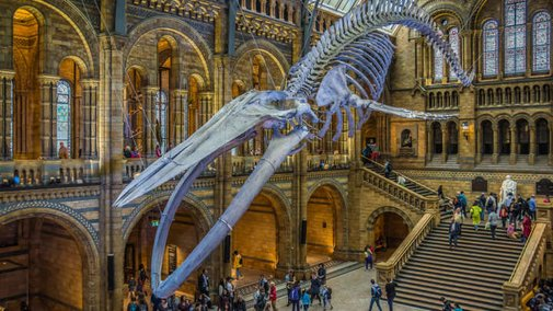 Twitter Fight: Science Museum And Natural History Museum