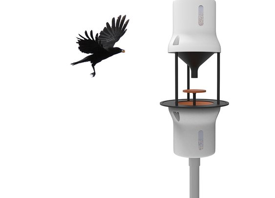 Training Crows to Pick Up Cigarette Butts For Food