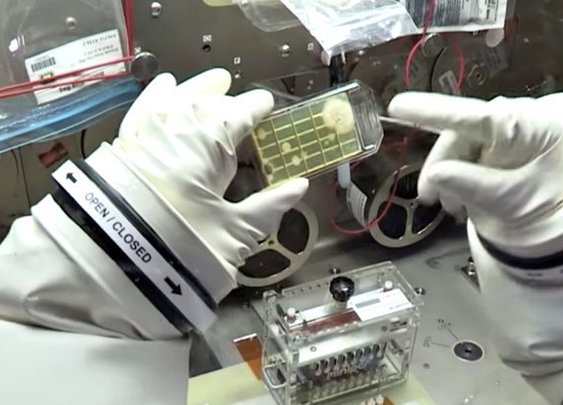 Astronauts have identified unknown microbes in space for the first time