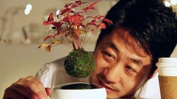 Air Bonsai: Levitating Bonsai Tree
