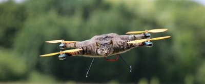 Taxidermy Drones