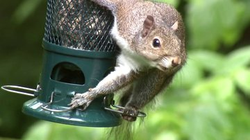 Squirrel Buster Plus: Rodent-Repelling Birdfeeder