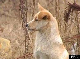 Loyal ass dog