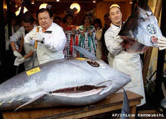 Tuna Fetches $736k in Tokyo