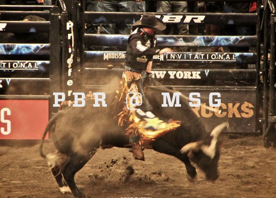 Photo Essay: Professional Bull Riders Madison Square Garden Invitational