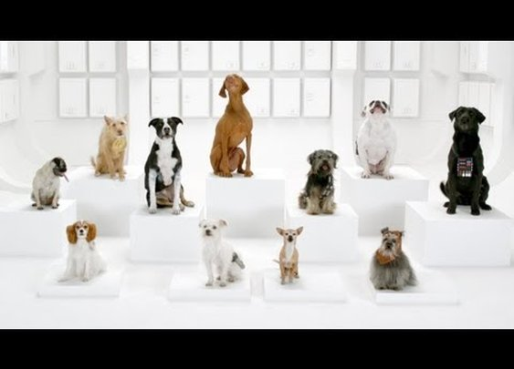 The Bark Side: 2012 Volkswagen Game Day Commercial Teaser      - YouTube