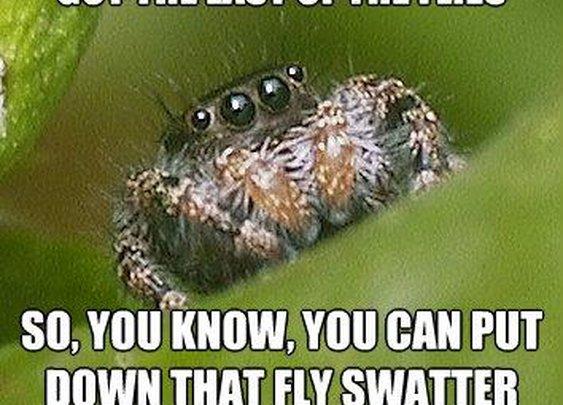 The Misunderstood House Spider