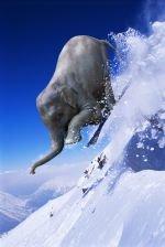 Elephant Skiing