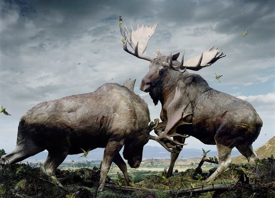 Epic painting of a moose battle