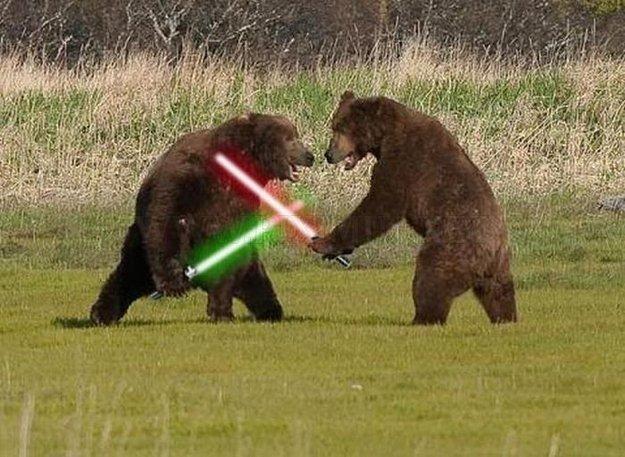 bear lightsaber fight gentlemint