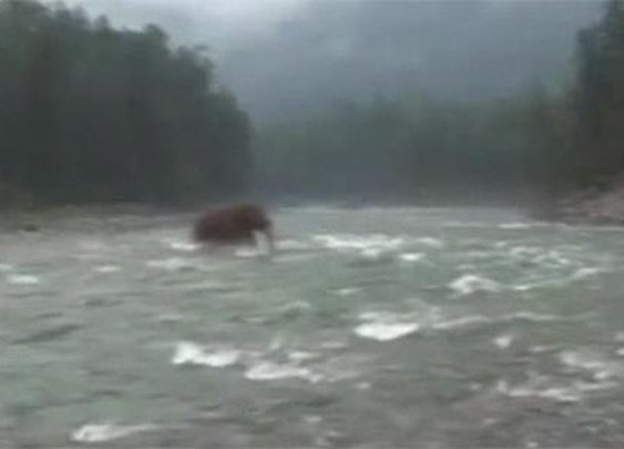 'Woolly mammoth' spotted in Siberia | The Sun |News