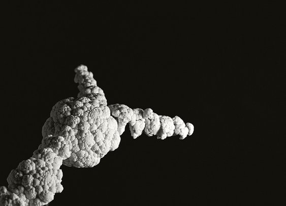 Cauliflower Space Shuttle Challenger, 1986