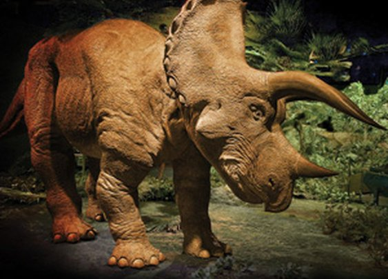 20 Foot Animatronic Triceratops - The Green Head