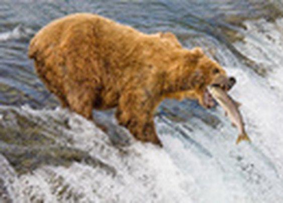 1x.com - Alaska. The Catch by Roman Golubenko