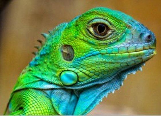 51 Amazing Photographs of Reptiles