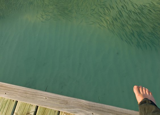 Make room for the sharks
