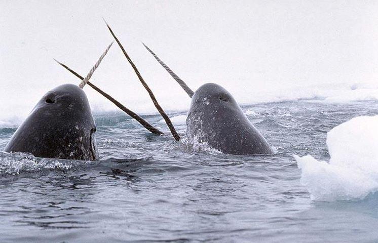 Arctic Fencing Team