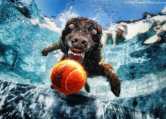 Playing Catch with Dogs Underwater - My Modern Metropolis