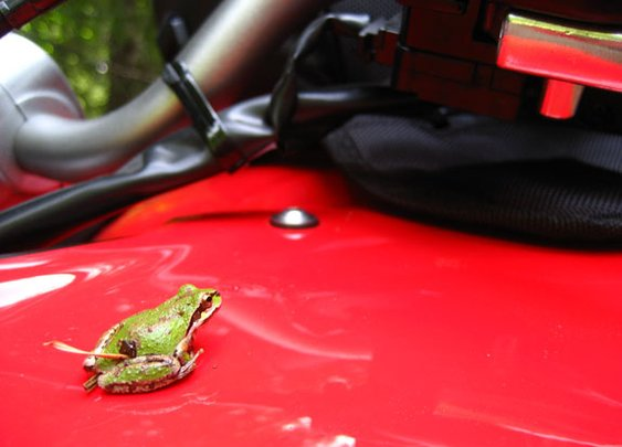Making Friends with Frogs