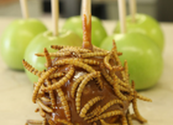 Chocolate scorpions, worm lollipops and maggot toffee apples