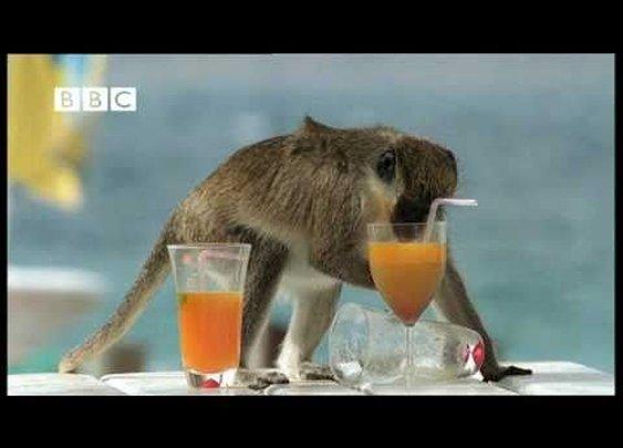 Drunk Monkeys Fail - Weird Nature      - YouTube