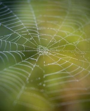 ☛ Patterns seen in spider silk and melodies connected