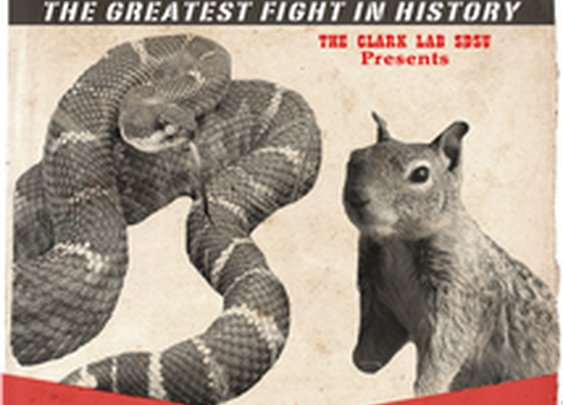 Project: Squirrel-Snake Face Off! | RocketHub